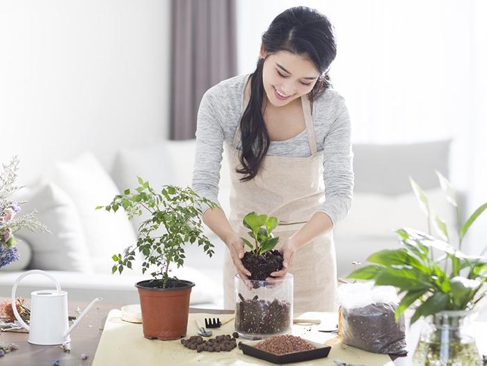 Trồng mới các cây cảnh để tạo thêm sinh khí cho căn nhà