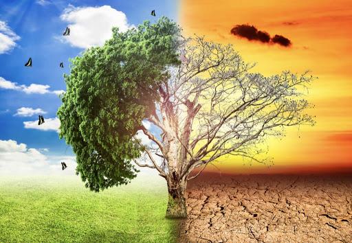 Biến đổi khí hậu